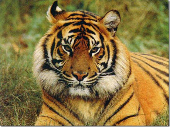 صور أجمل عشر حيوانات 2013 12102512525635an.jpg