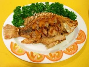 طريقة السمك البلطي2013