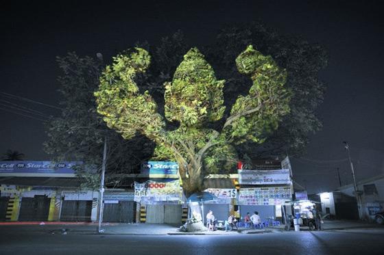 بالصور اشجار كمبودية2013 121126222321lHFW.jpg