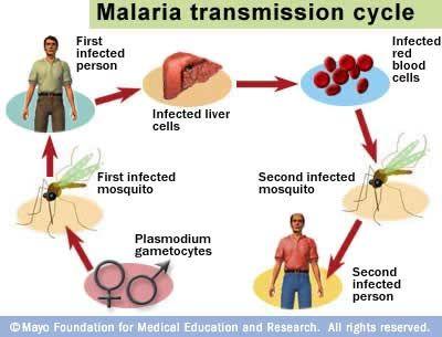 الملاريا Malaria 121202052817s1ZU.jpg