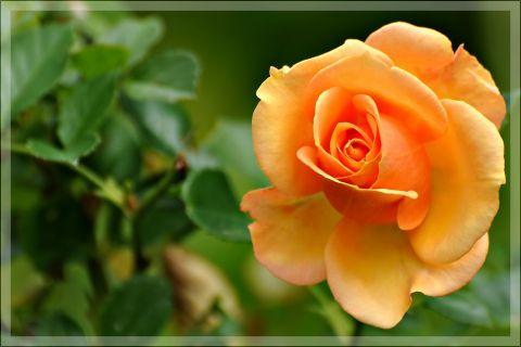 خلفيات زهور جديدة 2013