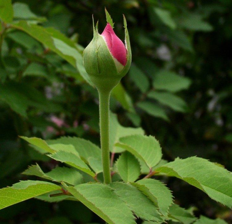 صور أزهار ملونة 2013 ، صور ورد روعة 2014 ، اجمد صور زهور 130307230824YOUx.jpg