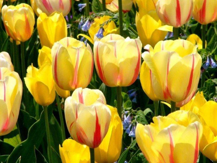 صور أزهار ملونة 2013 ، صور ورد روعة 2014 ، اجمد صور زهور 130307230824x8aB.jpg