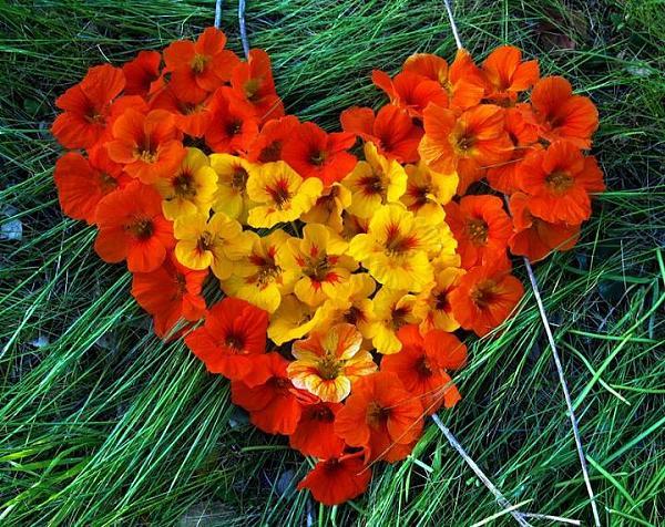 صور زهور متفتحة 2013 130307231020ZvXO.jpg