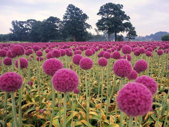 زهور جميلة 2013 ، اجدد ورد تحفة 2014 ، 130308161008ftpt.jpg