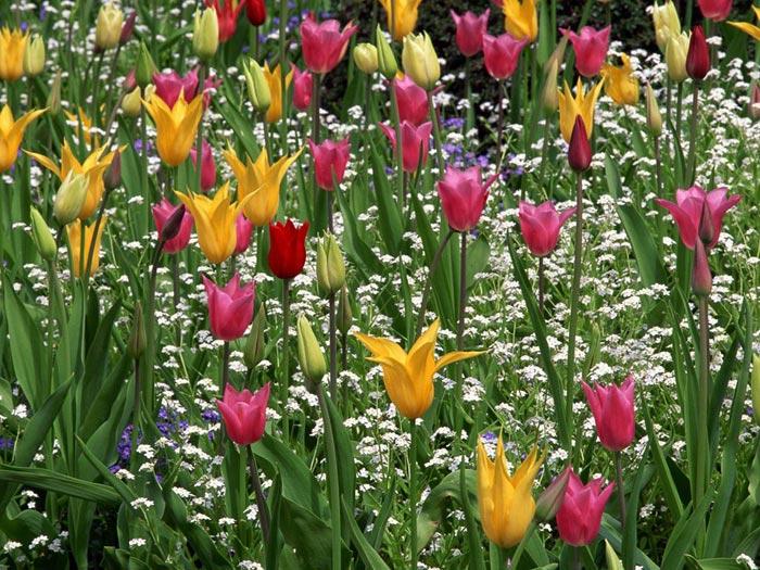 زهور جميلة 2013 ، اجدد ورد تحفة 2014 ، 130308161008zN1b.jpg