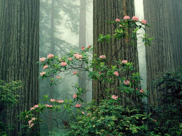 الوان تهبل للحياة 2013 ، صور طبيعية 2014 ، 130308161157TyLo.jpg