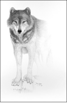 صور رسومات حيوانات مدهشه 2013 130308162136ZgzI.jpg