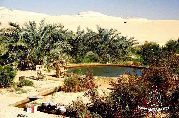 صور واحة حلوة 2013 ، احدث صور واحة مصر 130308163034SI3i.jpg