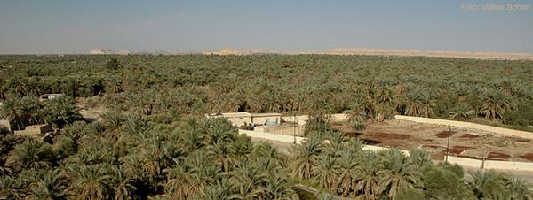 صور واحة حلوة 2013 ، احدث صور واحة مصر 130308163034jUGG.jpg