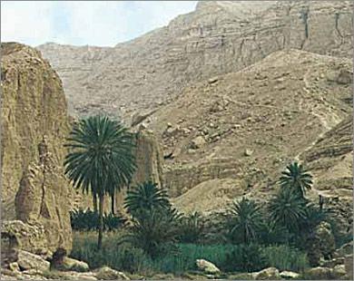 صور واحة حلوة 2013 ، احدث صور واحة مصر 130308163034lmjw.jpg