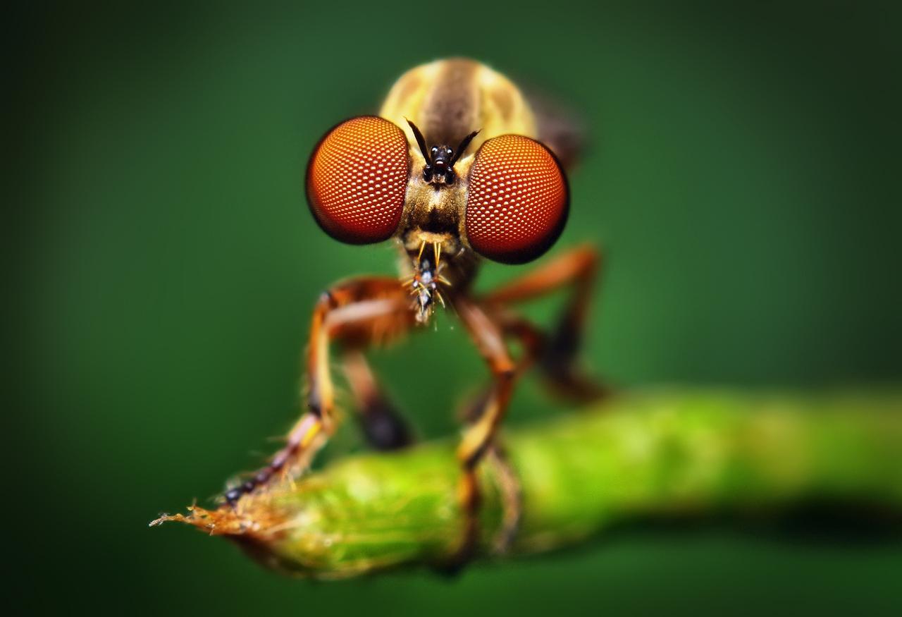 حشرات غريبة 2014 ، صور حشرة غريبة 1303081633160CKA.jpe