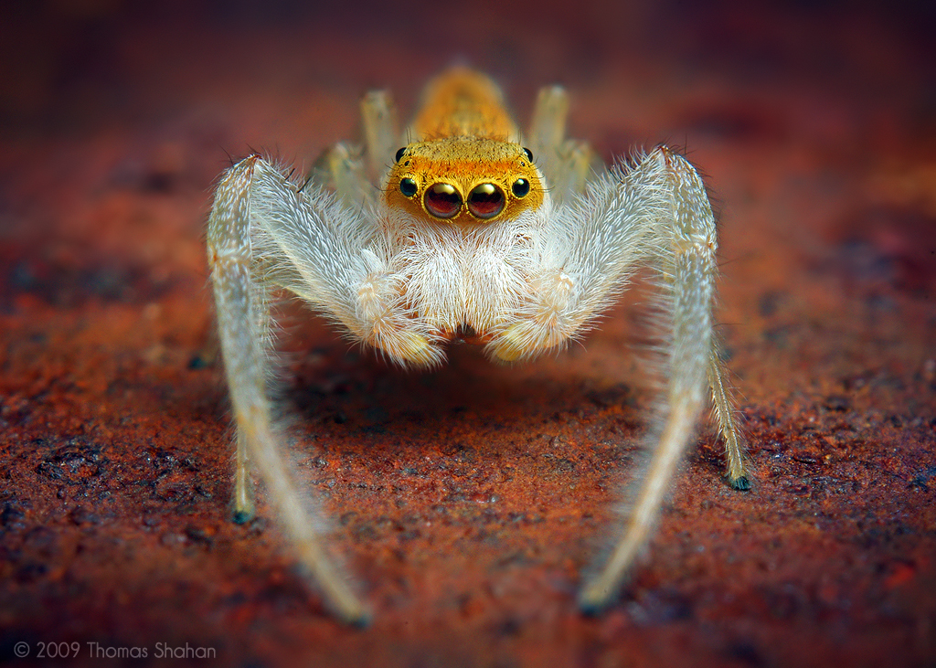 حشرات غريبة 2014 ، صور حشرة غريبة 130308163316BFVt.jpe