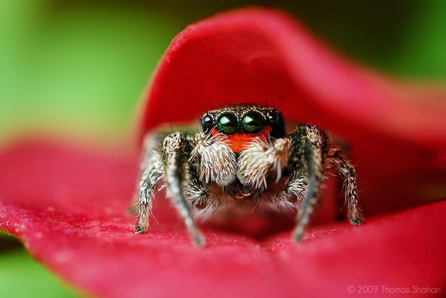 صور حشرات 2013 ، اوجه حشرات غريبة 2014 130308163316WfyP.jpe