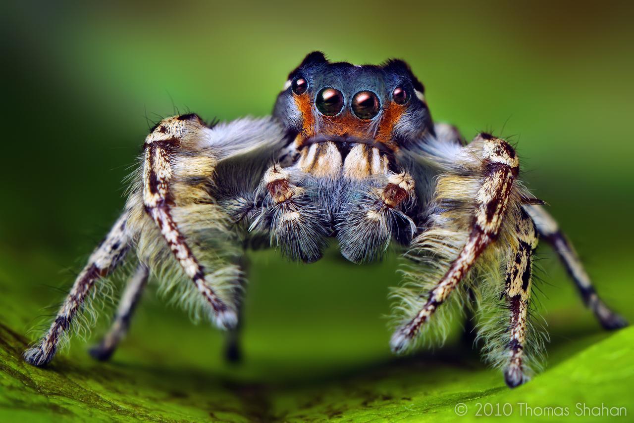 حشرات غريبة 2014 ، صور حشرة غريبة 130308163316hor0.jpe