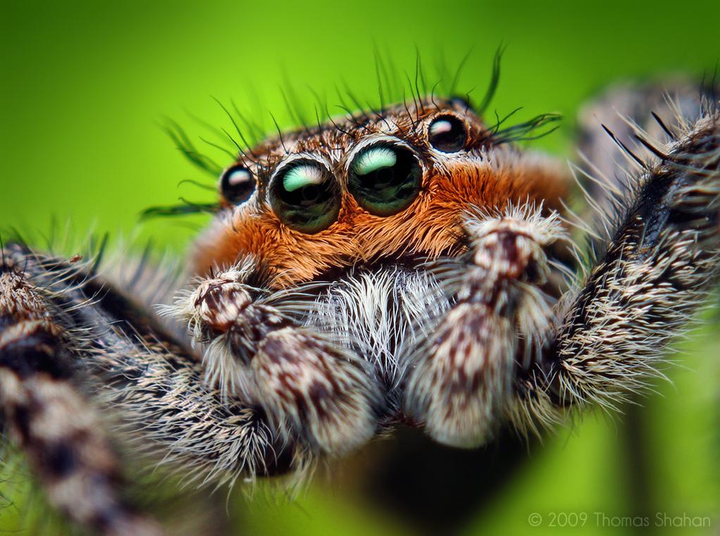 صور حشرات 2013 ، اوجه حشرات غريبة 2014 130308163316pWAb.jpe