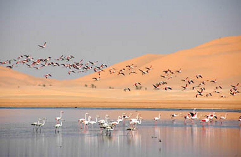الجزائر 2013 130405220135IbDp.jpg